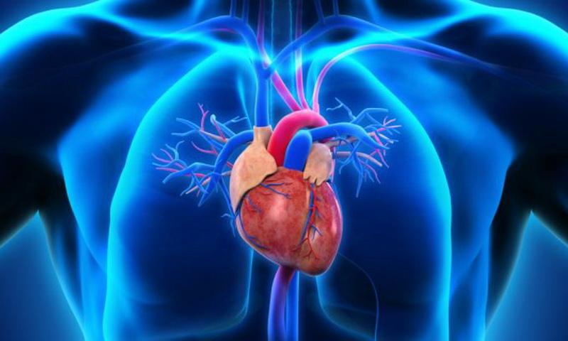 Organ - Organ Pokok pada Hewan dan Tumbuhan Lengkap ...