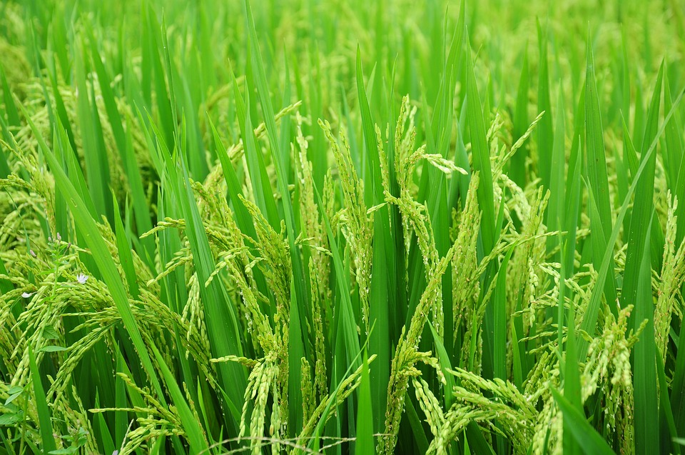 20 Contoh Tumbuhan Yang Berkembang Biak Secara Generatif Materi Kimia