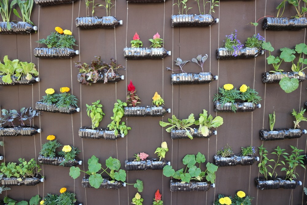 Vertical Garden Wall Outdoors Small Spaces Plants