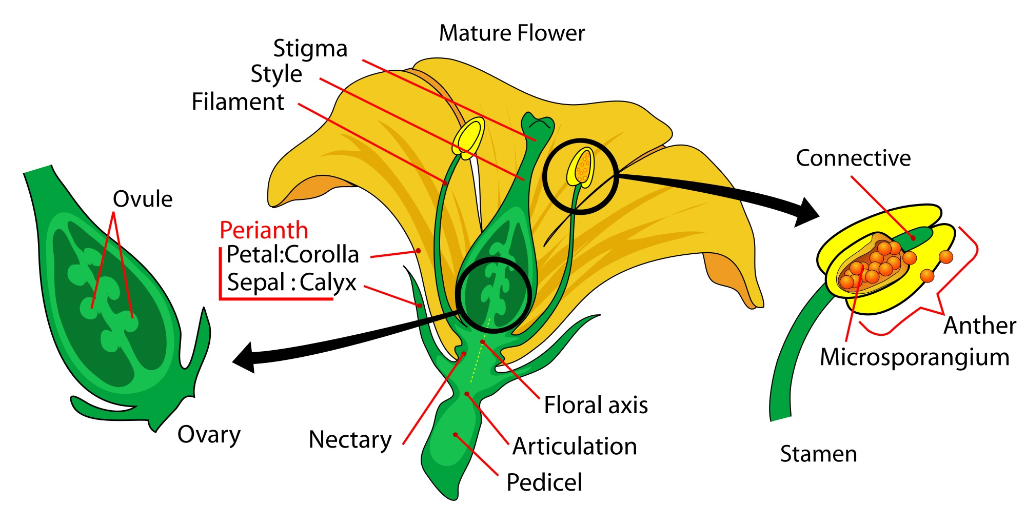 Hasil gambar untuk reproduksi tanaman