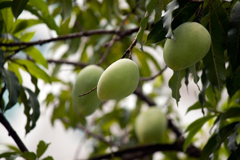 10 Contoh Tumbuhan Yang Berkembang Biak Secara Generatif Dan Vegetatif Materi Kimia